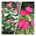 今日の花🌺