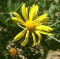 オールドレンズで花を撮る。~CANON EF 35-135mm USM