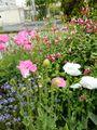 花壇の花 真っ盛り