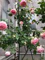 バラのある幸せ