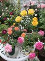 🌹P.Rose Garden 2021.05.17:8/8