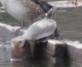 沼へ野鳥観察