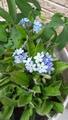一緒に植えたお花