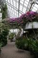 砺波市 エレガガーデンの温室
