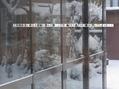 「らん展」新潟県立植物園