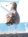 港へ野鳥観察