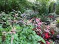 赤の夏花壇