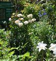 ベン・ウェザー・スタッフのシュートの花