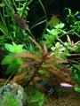 熱帯魚水槽の水草