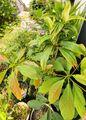 夏の観葉植物が芽吹きました🌿