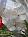 神代植物園の大温室2