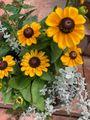 暖色系のお花さんに元気をもらう😅💦💦