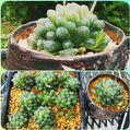 ☁️動きやすい気温💪温室✨お部屋🎶植物を整理🙆