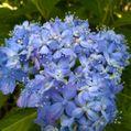 My garden flowers 💐
