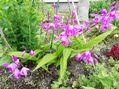 😊庭の花も載せてって😅