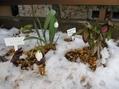 今日のクリロー花壇
