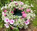 お庭のお花でアレンジメント😊🌸