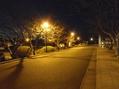 夜の散歩道。