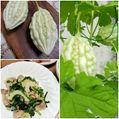キュウリ、ミニトマト、ヒマワリ、白ゴーヤ😃🎵