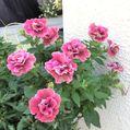 真夏の北側花壇