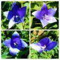 6日連続の『猛暑日』に咲く花たち🌞