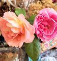 薔薇の生け花🌹
