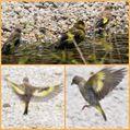 万博記念公園へ ②昆虫、野鳥たち