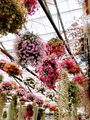②掛川花鳥園に行ってきました