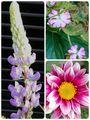 庭のお花  ほぼピンク😆