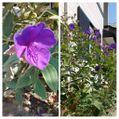 散歩道で見かけた花!