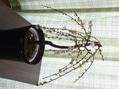 白い枝垂れ梅