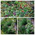 昨日の朝のマイカーの車窓から見つけた花たち