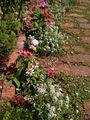 夏花壇…だいたい完成😅