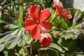 春の植え替え…②
