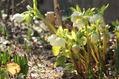 落葉堆肥を作るよん