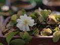 鉢の花たち1