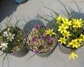 屋上の花 1