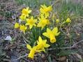 春を感じて…ティータイム