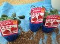 四季成り苺を衝動買い
