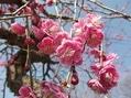 仕事場の畑の花達