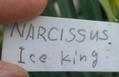 アイスキングだったのに、いまはアイスフォーリス(笑)。