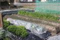 三月の菜園