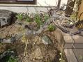 庭へ、植え付け