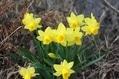 黄色は 春の色