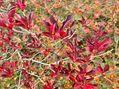 10/1  【白馬五竜高山植物園、紅葉が見ごろです】