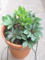 今日の植物。