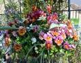 花いっぱいのハンギングバスケット