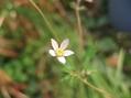 小さな小さな花です