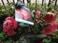[i:232]赤い花[i:232]
