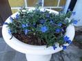 ブルーの花2点